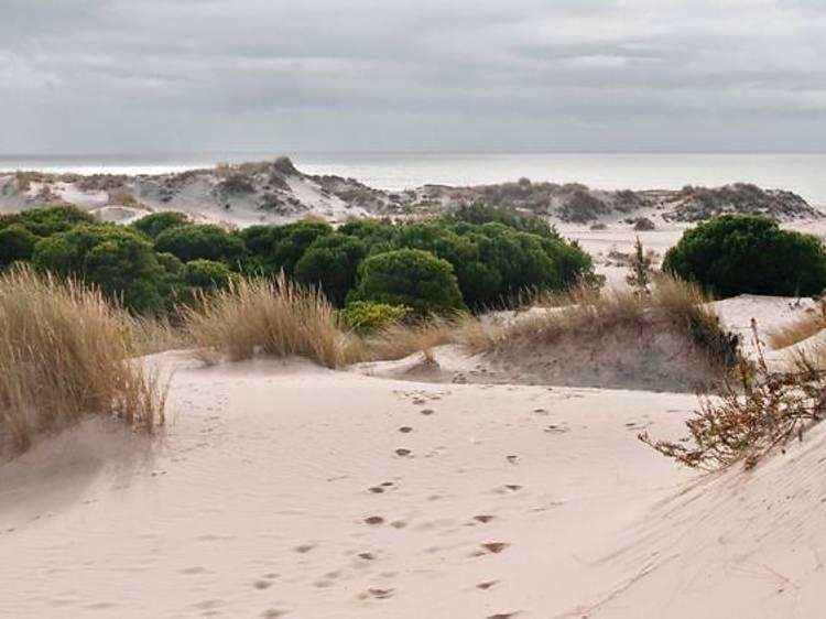 Entre aiguamolls i fauna protegida a Doñana