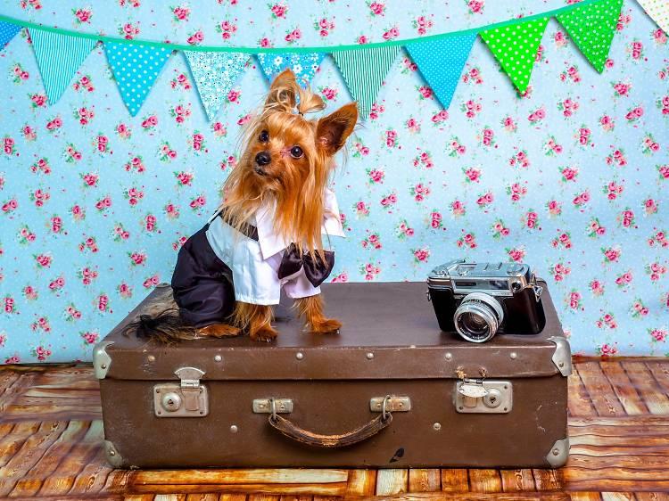 Hotéis que aceitam animais de estimação em Portugal