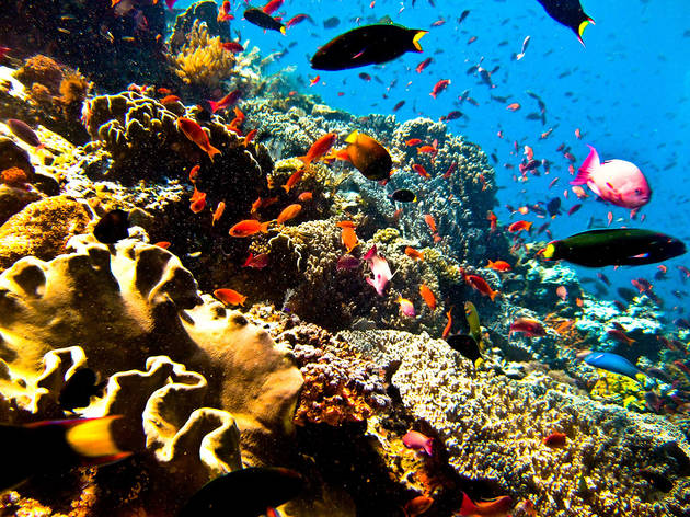 Flores TTD diving