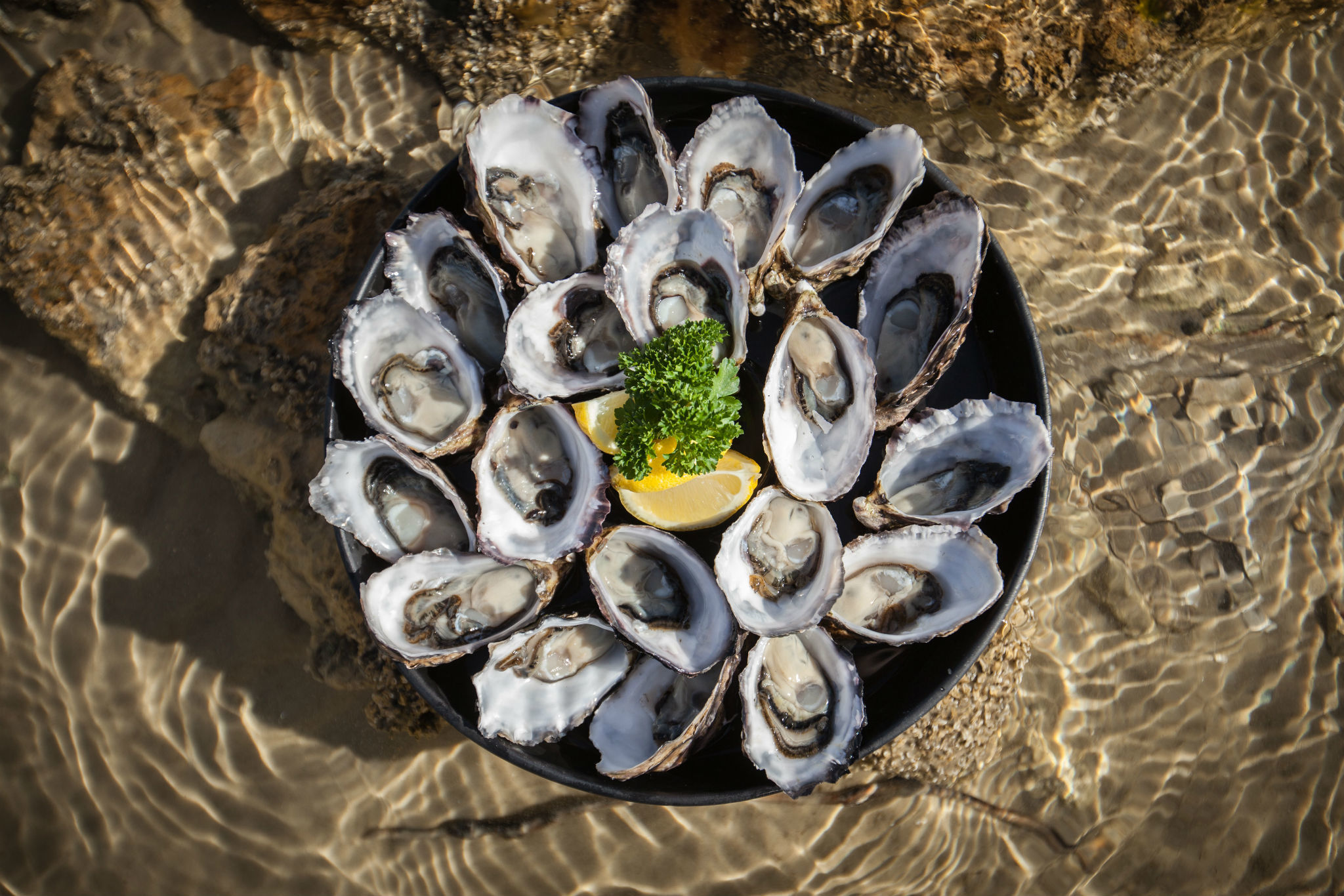 Get Shucked Oysters, Bruny Island