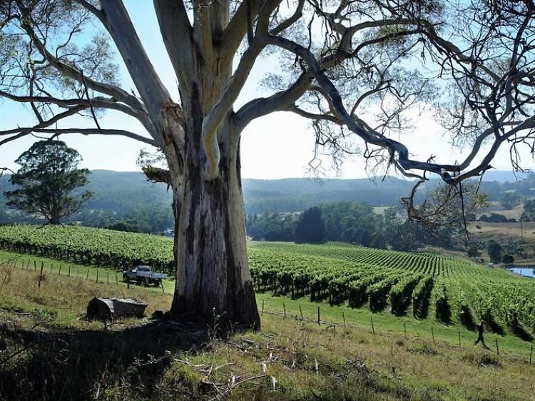 Tamar Valley Wine Route