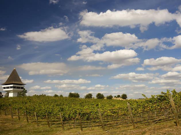 Mitchelton Wines