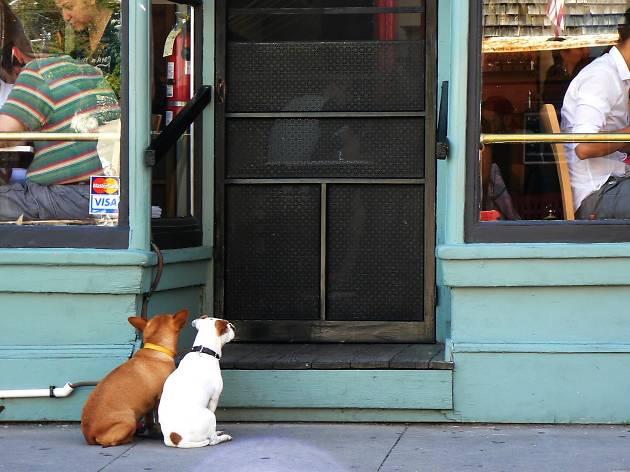 animais, porta, restaurantes
