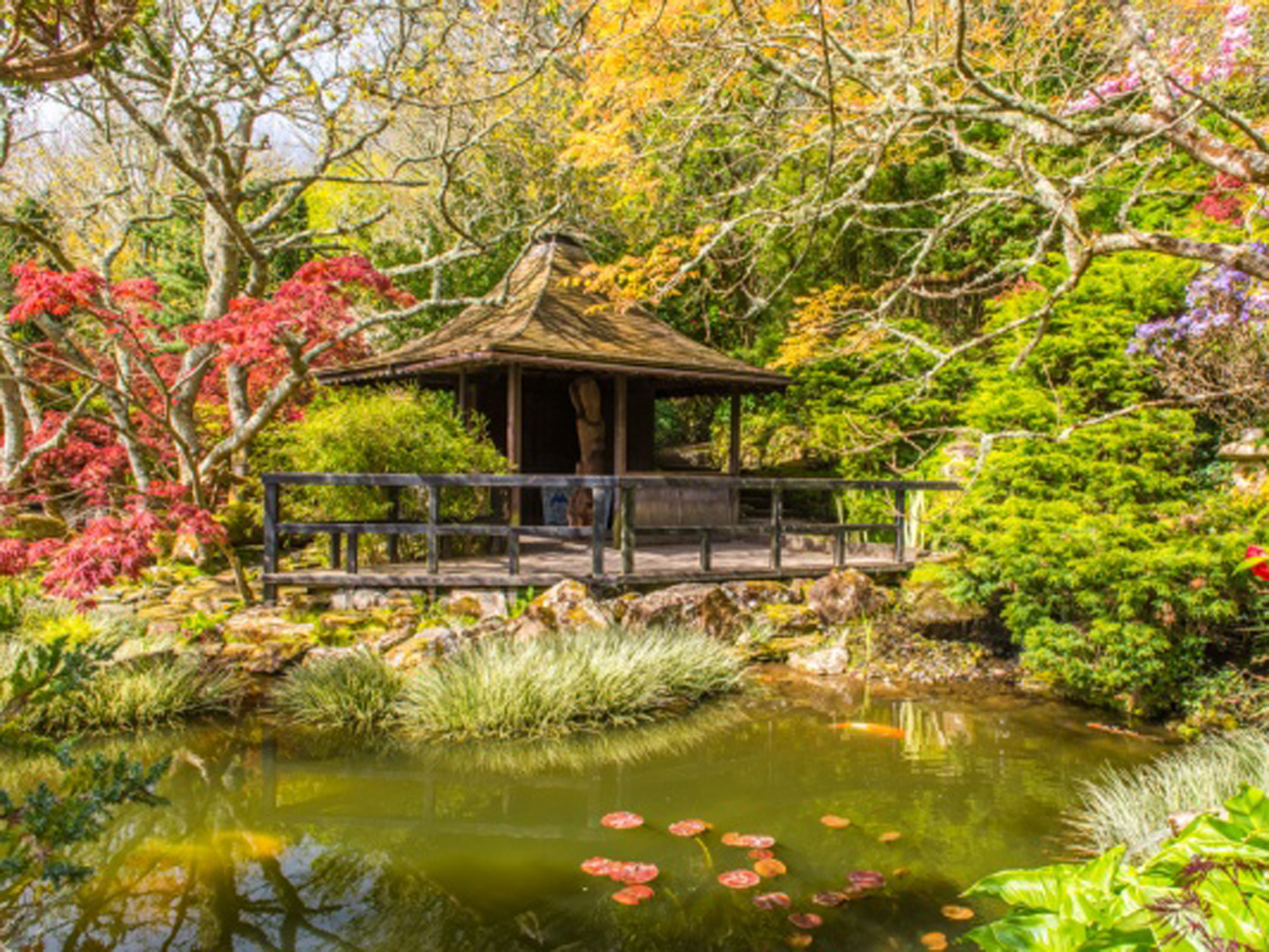 The Japanese Garden TTD Newquay