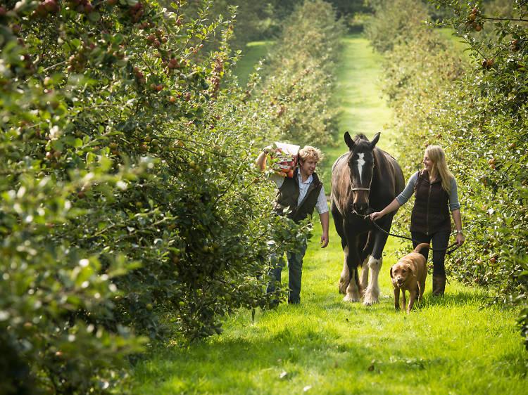 Healeys Cyder Farm