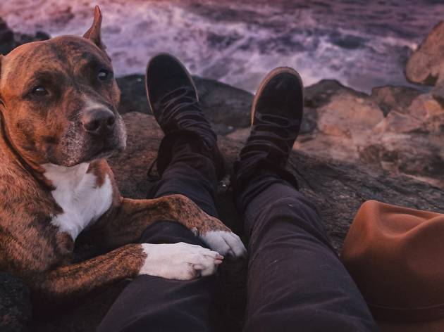 Dog-friendly weekend trips