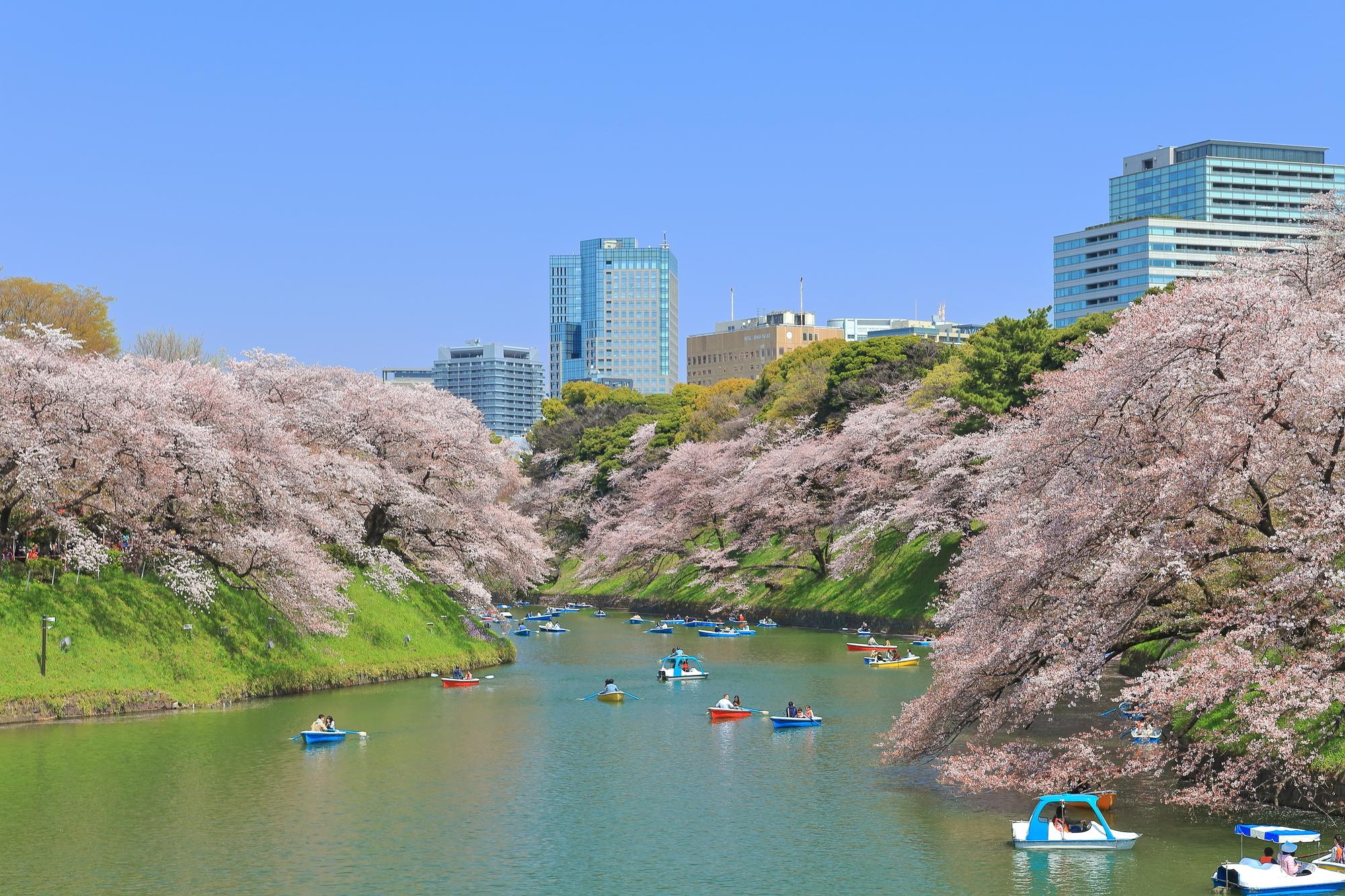 Chidorigafuchi Boat Area | Time Out Tokyo
