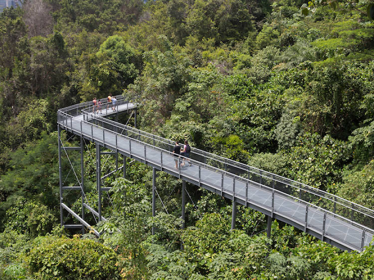 The best hiking trails in Singapore