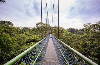 TreeTop Walk at Macritchie Reservoir hiking trails