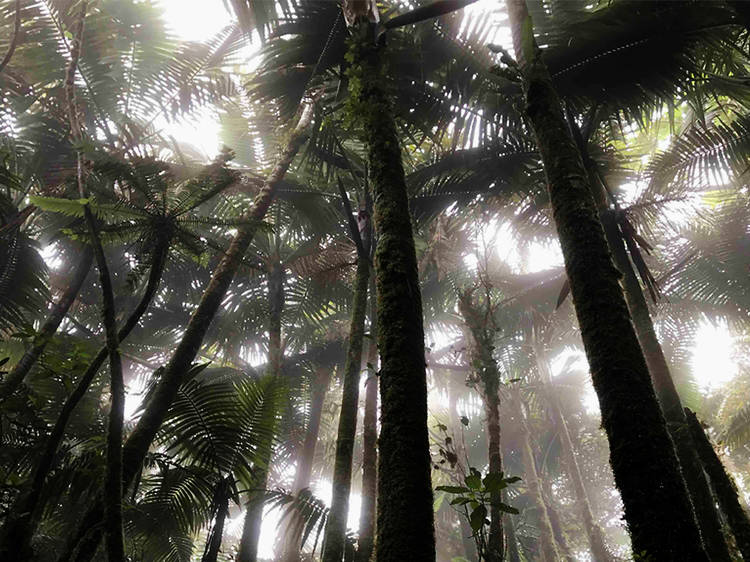 The Rainforest Stories