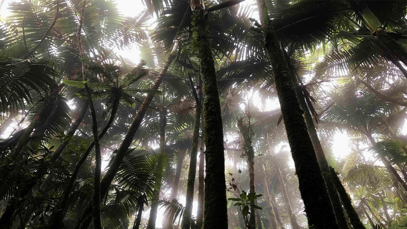 generic - rainforest