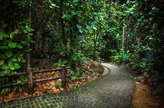 Bukit Timah Nature Reserve hiking trails
