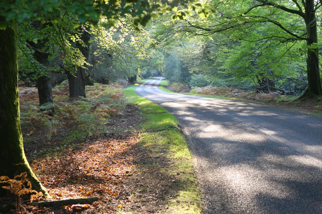 Brockenhurst Village