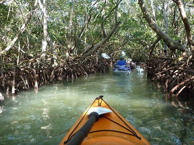 Mangrove Sarasota