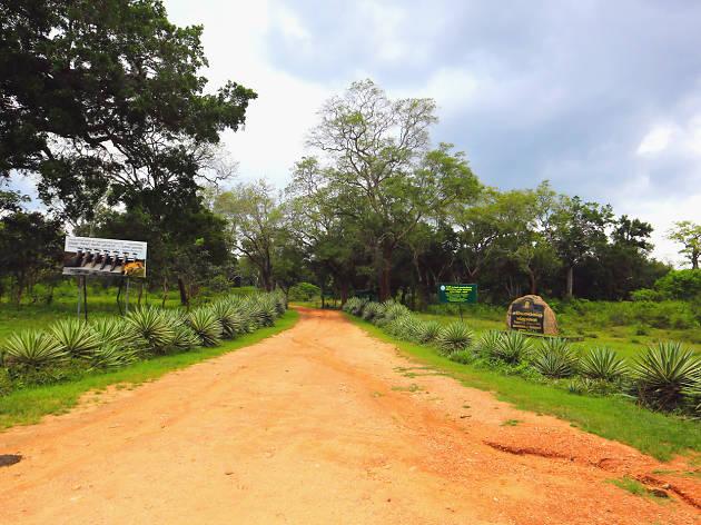 Safari at Lunugamvehera
