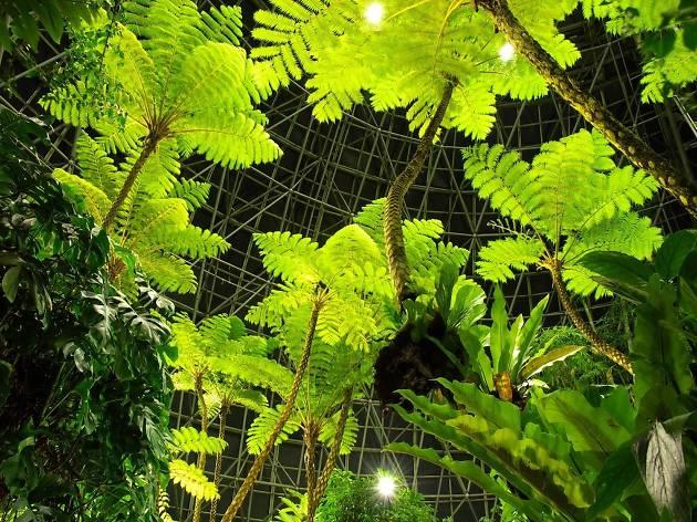 夢の島熱帯植物館夜間開館2018