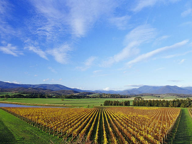 Australian Wine Tour Co