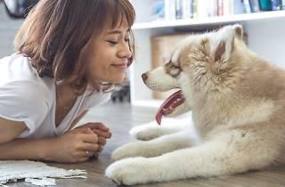 SPCA Singapore - Dog