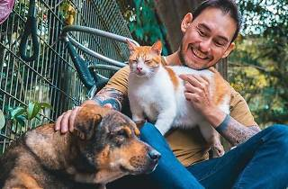 Animal Lovers League - cat and dog