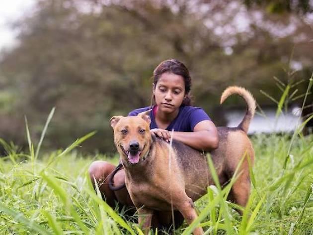 Causes for Animals Singapore - Dog