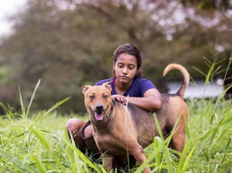 Causes for Animals Singapore