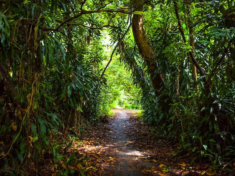 Bukit Timah MTB Trail
