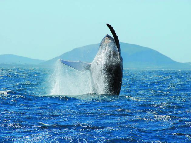 Visit Sunshine Coast, whales