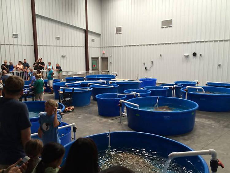 Karen Beasley Sea Turtle Rescue and Rehabilitation Center