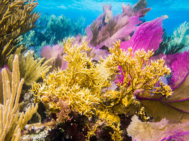 The Mesoamerican Barrier Reef - Cozumel - Mexico