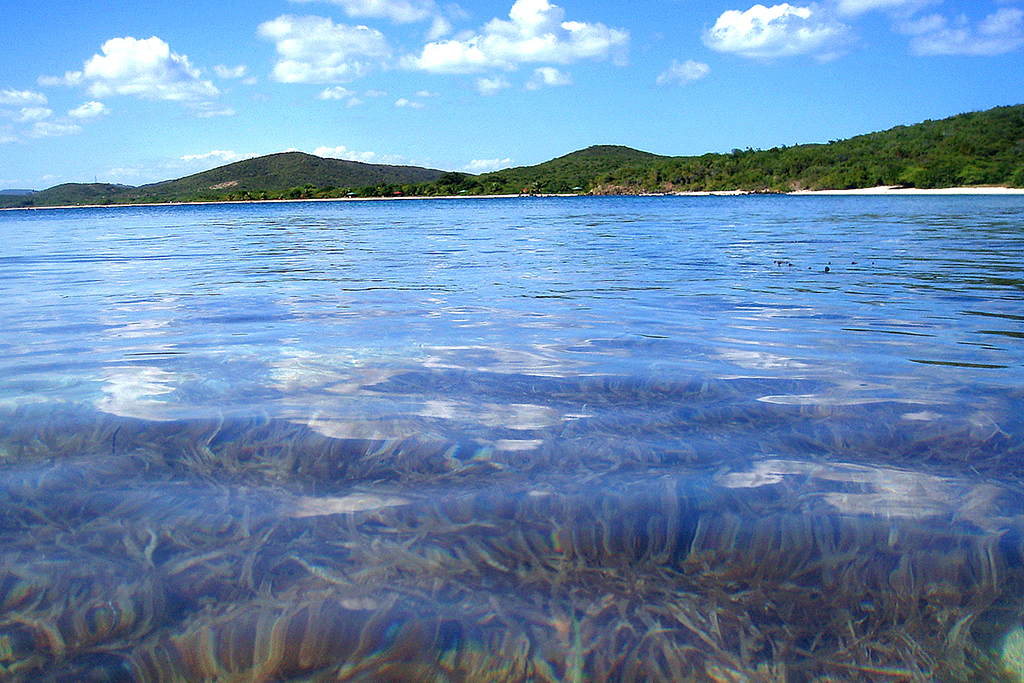 Vieques' Bioluminescent Bay