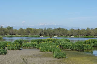 L'estany de Vilaüt