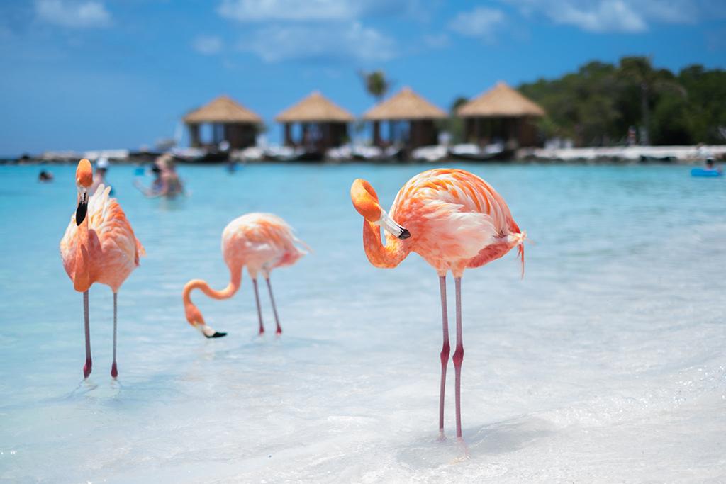 Private boat to Flamingo BeachPriva