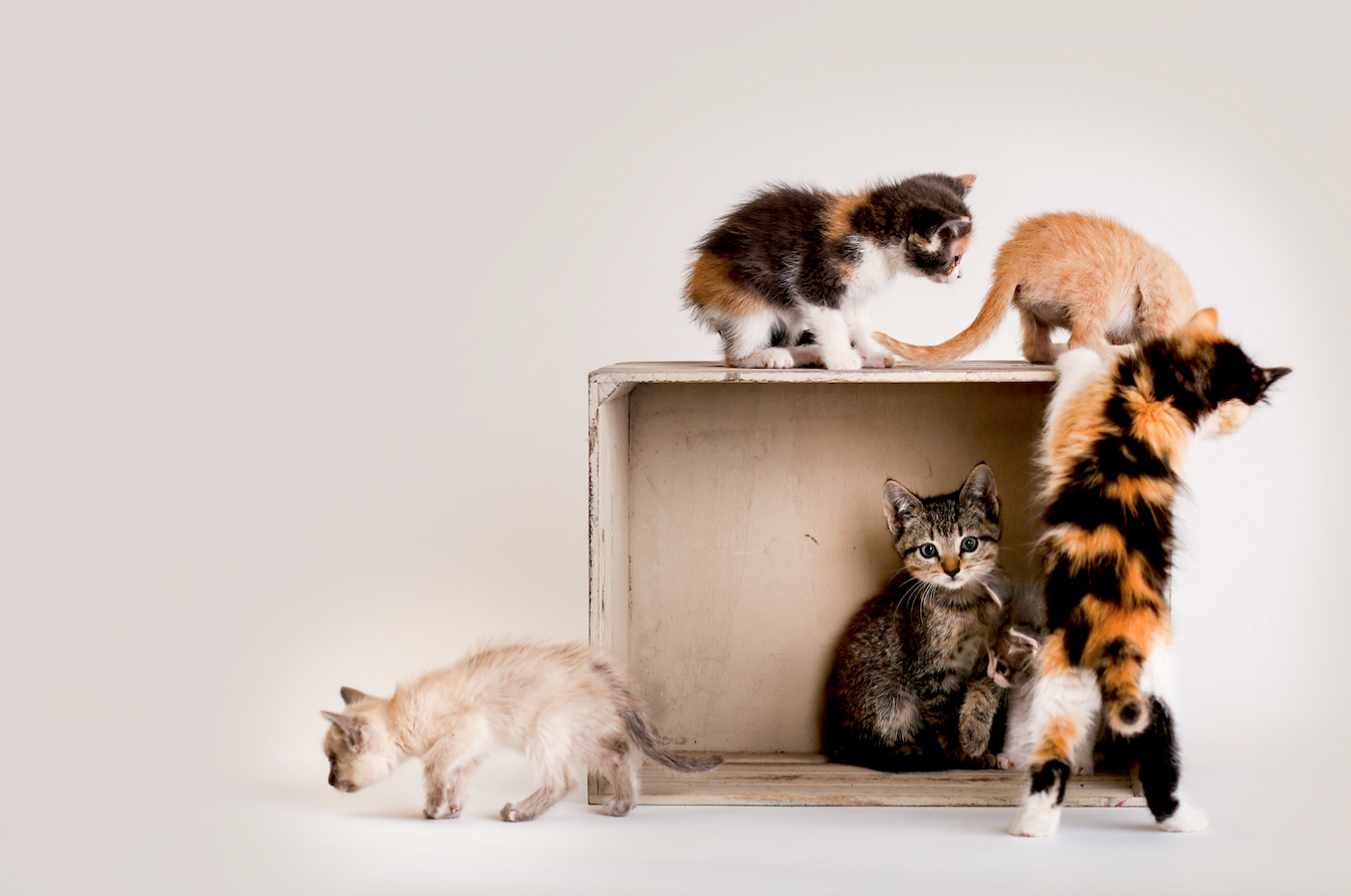 London For Cat People 8 Things To Do In London If You Love Cats