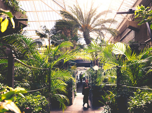 Barbican Conservatory Attractions In Barbican London
