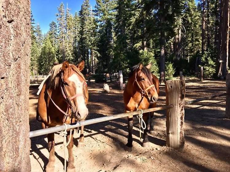 Journey on horseback