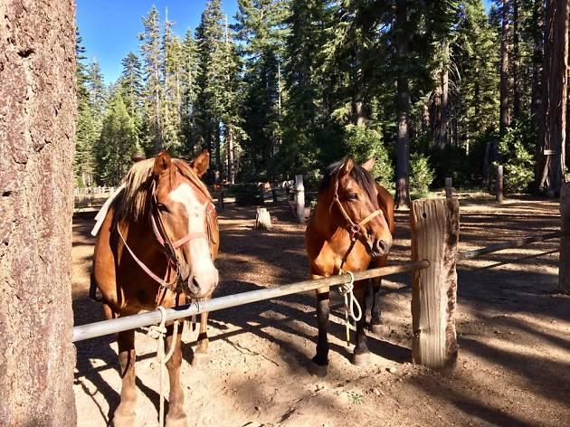 Camp Richardson's Corral