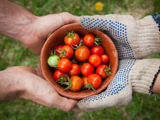 People hold a bowl of tomatoes