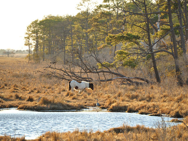 Chincoteague Island - Virginia - United States
