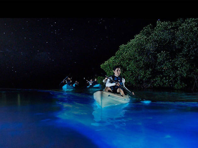 Night Time Bioluminescence Kayak Tours - Cocoa Beach - United States