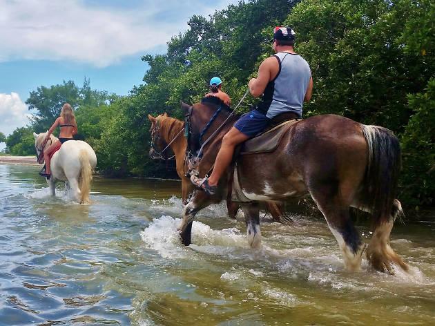 Florida Horseback Trail Rides - Cocoa Beach - United States