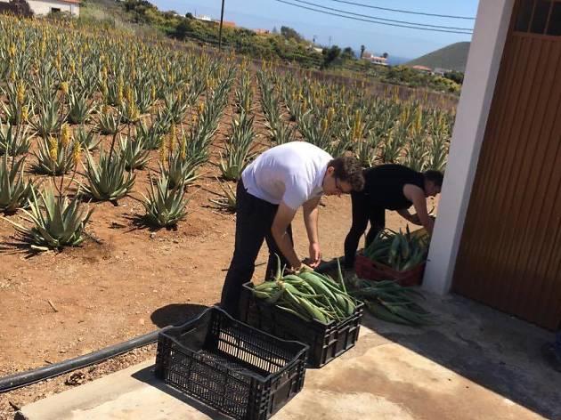 Finca Canarias Aloe Vera, Fuerteventura