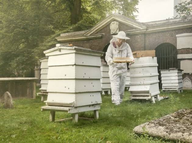 Camilla Goddard at Capital Bee