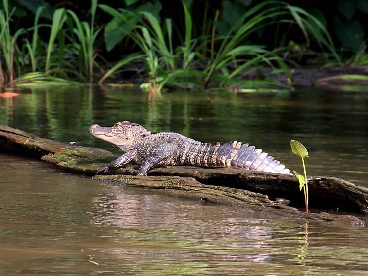 Louisiana: Take the Honey Island Swamp Tour