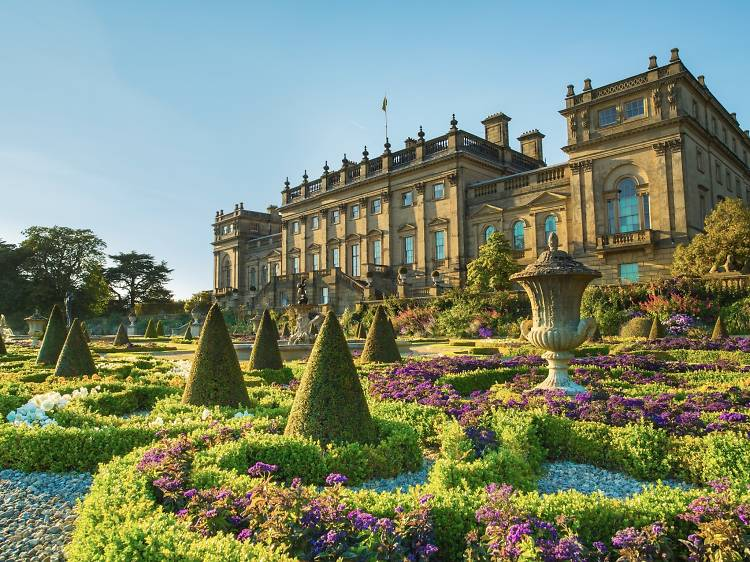 Discover birds, period art and ruins at Harewood House