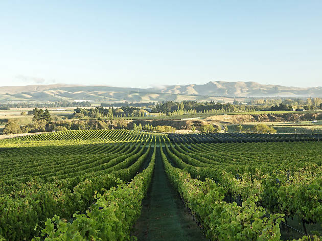 North Canterbury wine region, things to do in Christchurch, New Zealand
