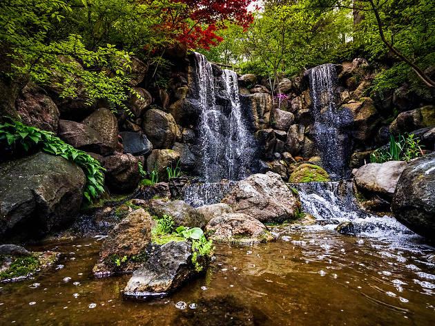 Anderson Japanese gardens, eitw