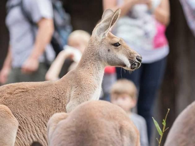 Nashville Zoo at Grassmere