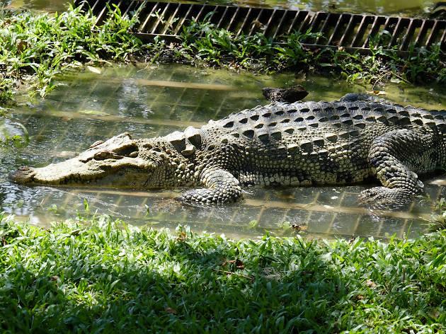 Night Safari at Madras Crocodile Bank Trust - Chennai - India