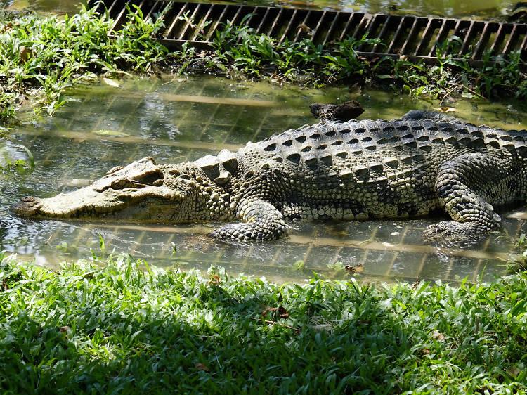 Night safari at Madras Crocodile Bank Trust