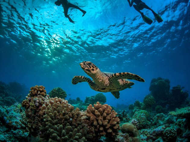 Sipadan Malaysia diving
